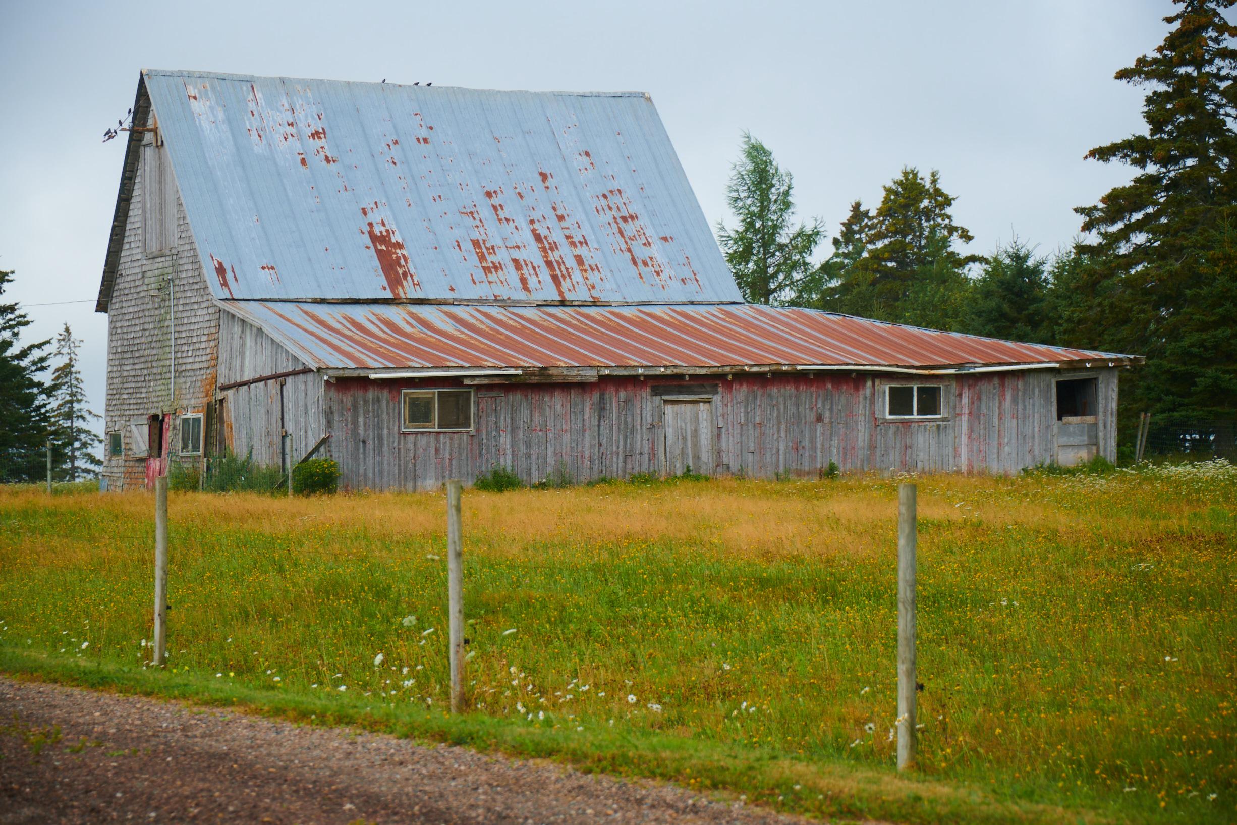 Gray PEI Barns