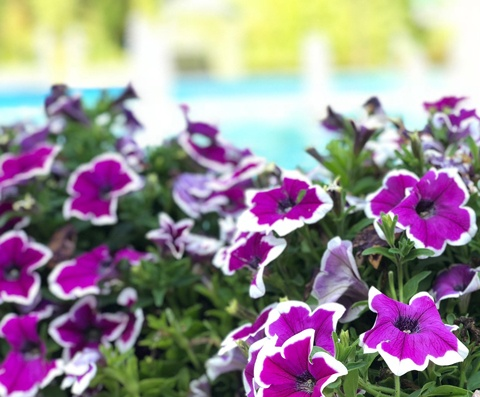Innovation in Bloom